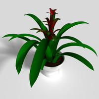 bromeliad ostara plant 3d obj