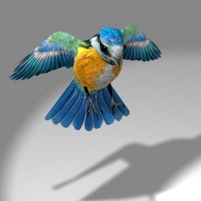 3d cute songbird blue tit model
