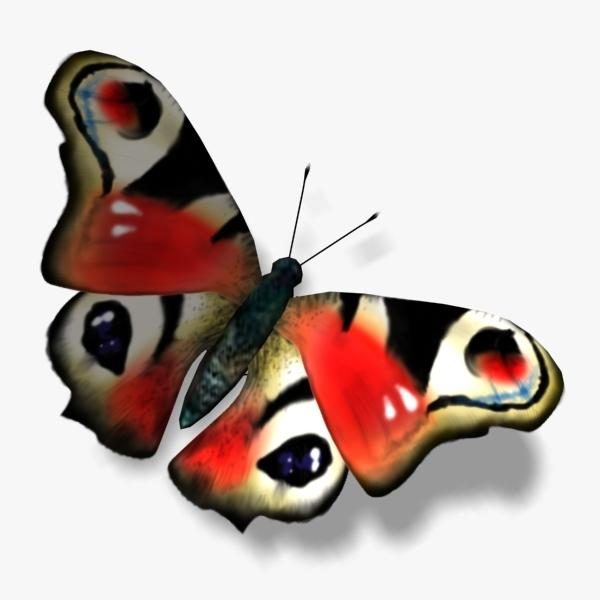 3d peacock butterfly wings model