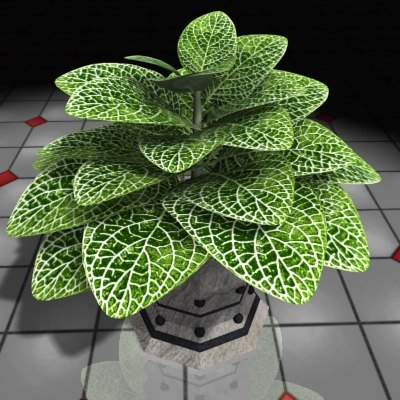 xsi plant fittonia house