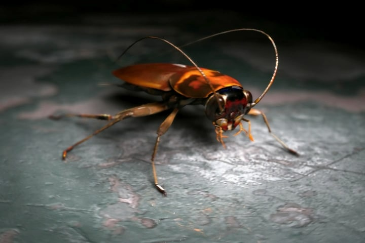3ds max roach bug insect