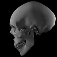 skull model - Maya 7