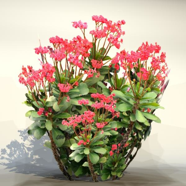 pc flower max