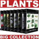 Big collection of plants