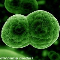3d dividing cell model