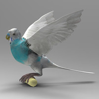 Parrot_W