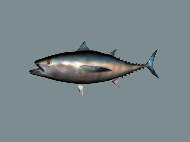 3d ma bluefin tuna