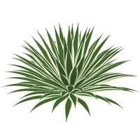 plant agave angustifolia max