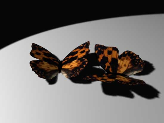 3dsmax butterfly 03