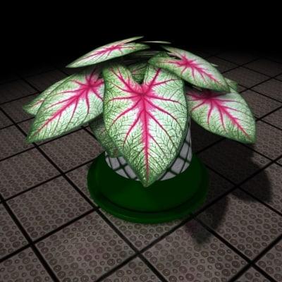 lightwave decorative plant caladium house