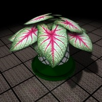 lightwave decorative plant caladium house