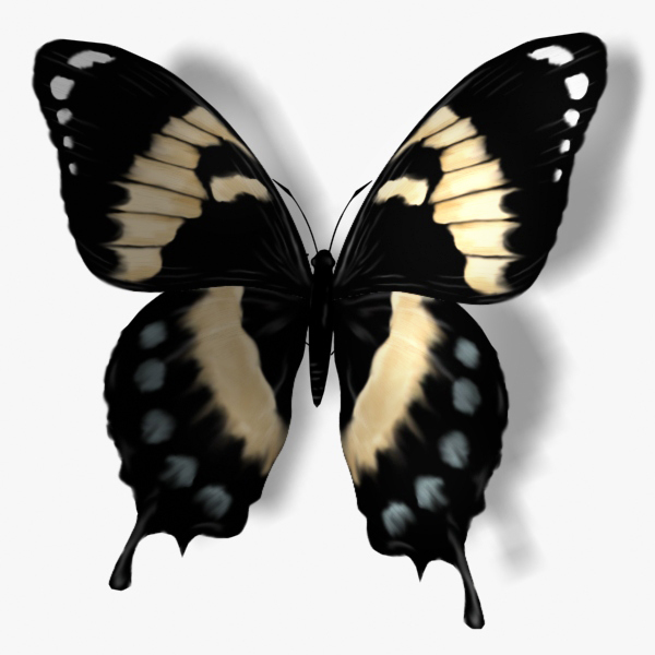 3ds max papilio homerus butterfly wings