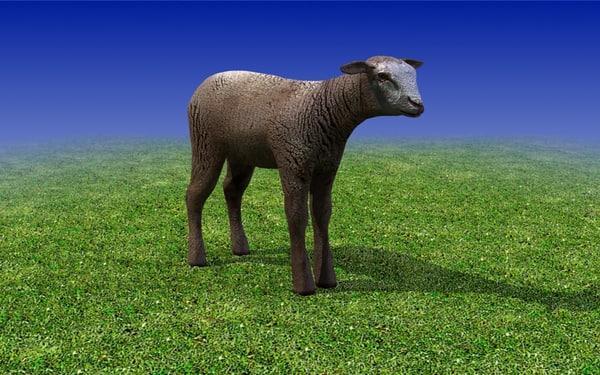 brown calf sheep 3d model