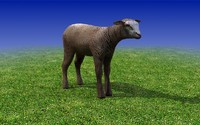 Calf Sheep 3dmodel