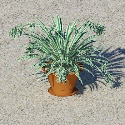 plant chlorophytum 3d model