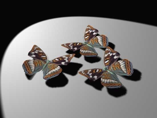 maya butterfly 05