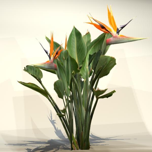 max pc flower