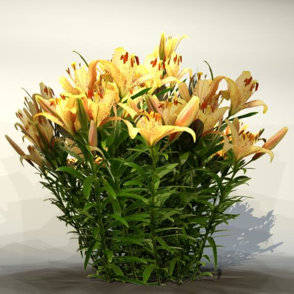 maya pc flower