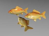 Goldfish.rar