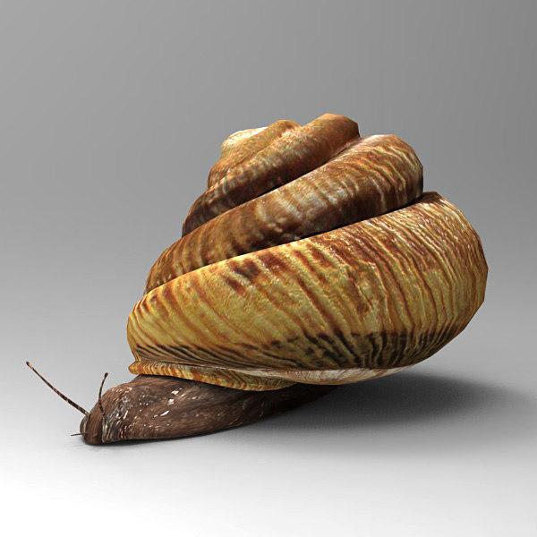 max snail