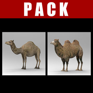 camel 3d 3ds