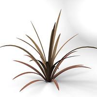 Phormium Tenax Sundowner Plant