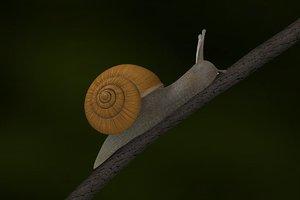 maya snail scene