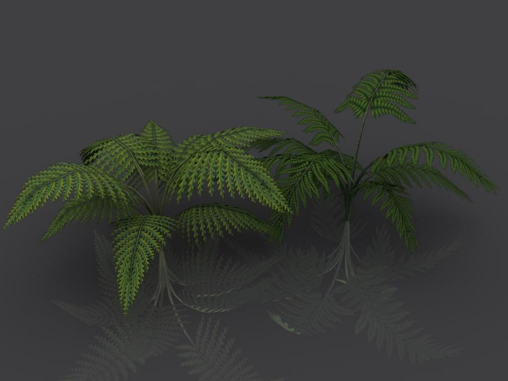 3d model ferns