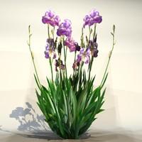 Flower_030.zip