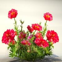 Flower_039.zip