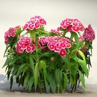 Flower_050.zip