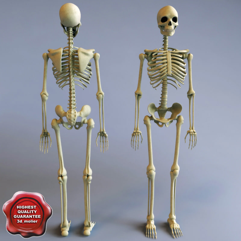 human skeleton Find great deals on ebay for human skeleton in medical teaching and education supplies shop with confidence.
