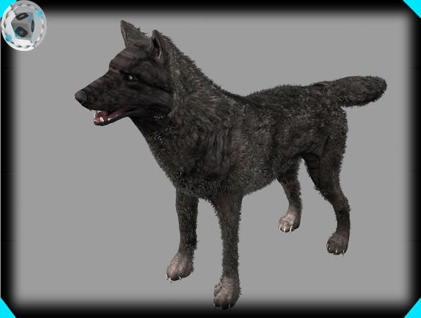 3d model black wolf