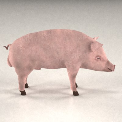 male pig 3d model