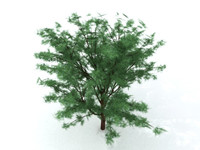 tree polygons 3d model