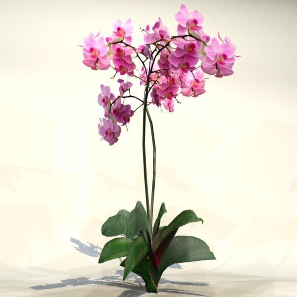 3d model pc flower