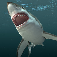 Great white shark(.obj, .3ds)