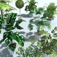 plant_Collection.zip