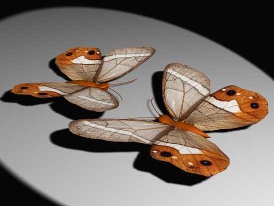 3d butterfly 06 model