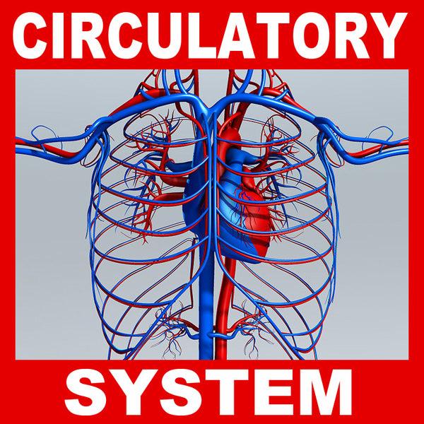 max circulatory medically human