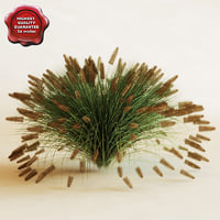 fountain grass max