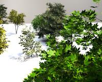 trees 3d c4d