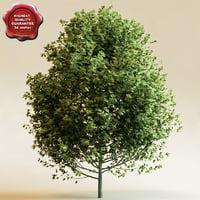 3d model red oak