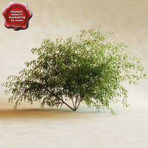 river birch 3d model