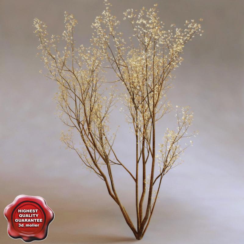 service berry amelanchier arborea 3d 3ds