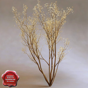 service berry amelanchier arborea 3d 3ds