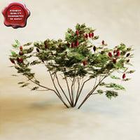 3d model sumac staghorn rhus typhina