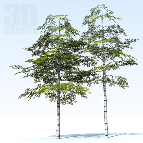 3d birch trees model