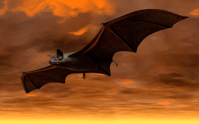 3d brown bat model