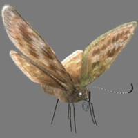 butterfly fur dingy skipper 3d model